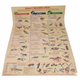 Insect Identification Chart (Laminated)