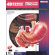 4D Stomach & Other Organs Anatomy Model