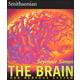 Brain (Smithsonian)