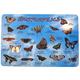 Butterflies Placemat
