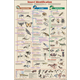 Insect Identification Chart non-laminated