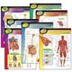Human Body Learning Charts (7 Charts)