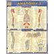 Anatomy 2 Quick Study