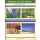 Words of the Week Volume 2