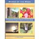 Words of the Week Volume 5