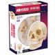 4D Vision Human Anatomy Exploded Skull Model