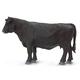Black Angus Cow (Safari Farm)