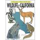 Wildlife of California Coloring Book