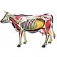4D Cow Anatomy Model