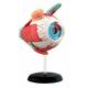 4D Eyeball Anatomy Model