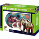 4D Vision Wooly Mammoth Anatomy Model