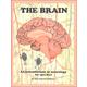 Brain: An Introduction to Neurology