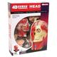 4D Human Head Anatomy Model