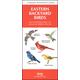 Eastern Backyard Birds Guide