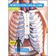 Body of Evidence 2: Skeletal System DVD