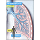 Body of Evidence 5: Respiratory System DVD