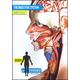 Body of Evidence 6: Digestive System DVD