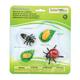 Life Cycle of a Ladybug (Safariology)
