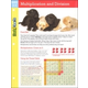 Multiplication and Division FlashChart