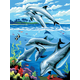 Painting By Numbers - Dolphins (Junior Small)