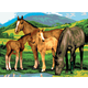 Painting By Numbers - Horses & Foals (Junior Large)