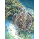 Colour Pencil By Numbers - Sea Turtle