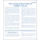 Ultrastructure of Animal Cells Microslide Set