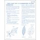 Leaf of Flowering Plant Microslide Lesson Set