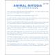 Animal Mitosis Microslide Lesson Set
