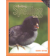 Building Spelling Skills 2 Worktext 2ED