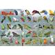 Popular Birds Placemat