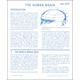 Human Brain Microslide Lesson Set