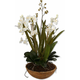 Moth Orchid Planter