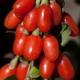 Big Lifeberry Goji