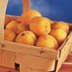Moongold Apricot