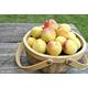 Twocot Apricot