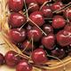 Schmidts Bigarreau Cherry