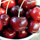 Starking Hardy Giant Antique Sweet Cherry