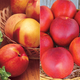 EasyCare Nectarine Tree Collection