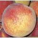Canadian Harmony Peach
