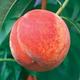 GaLa Peach