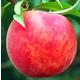 Starking Delicious Peach