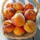 Venture Peach