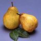 Blakes Pride Pear
