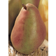 Duchess Pear