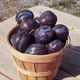 Big Blue Plum