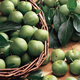 Green Gage Plum