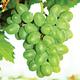Gratitude Grape