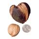 Shellbark Hickory Nut