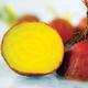 Golden Beet Seed